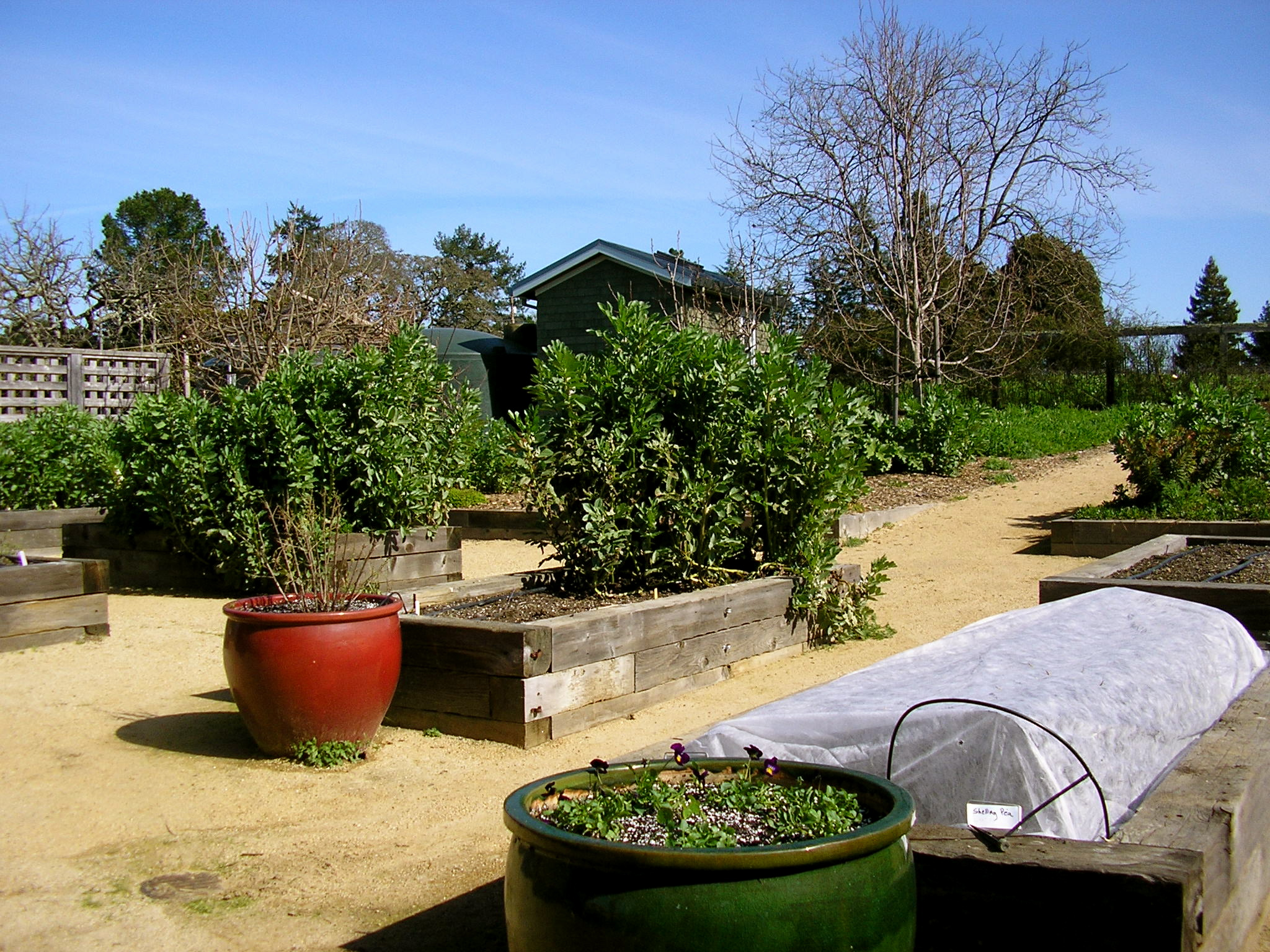 Here's the Rancho Pillow garden in Winter.