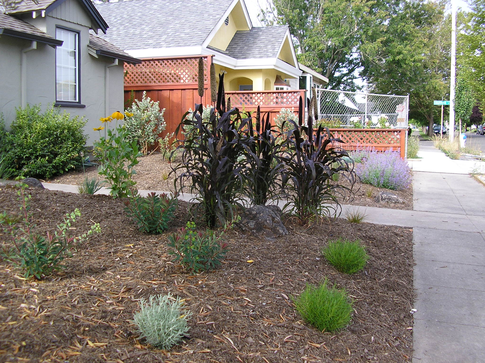 Here is a garden in Santa Rosa Designed by MML and installed with Julian Sanchez.